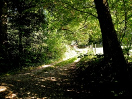 Shadows & Shade on a Swiss pathway