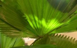 shots around a fan palm 3